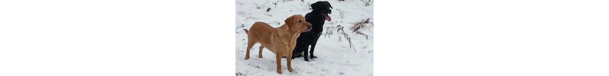 Baldock Top Dogs