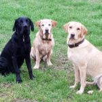 cropped-3-dogs.jpg